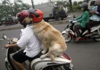 huấn_luyện_chó_ngồi_trên_xe