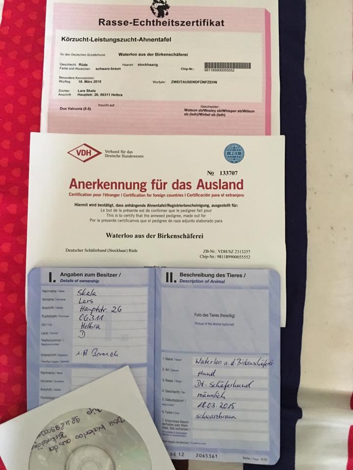 Giấy VK chó becgie nhập Đức