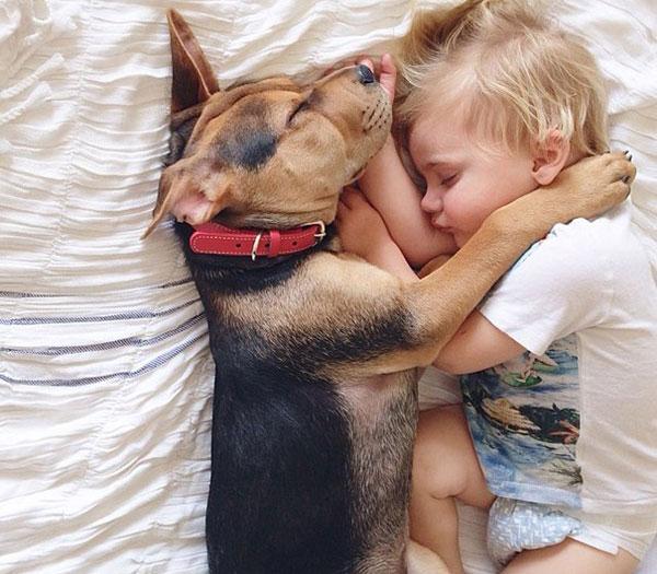 Chó ngủ cùng giường