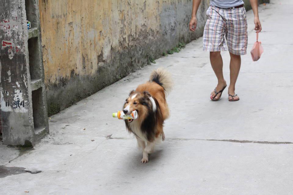 Huấn luyện chó tha đồ vật về cho chủ