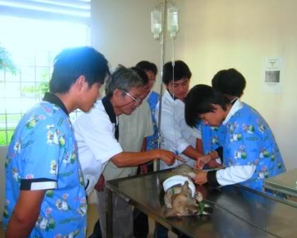 Truyền dịch cho chó mắc bệnh Parvovirus